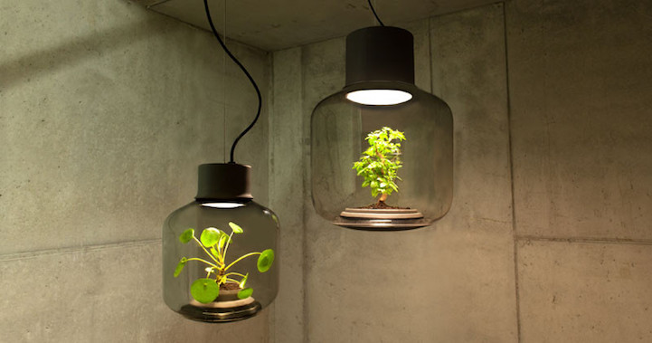 Grow Plants Indoors Without Sunlight Or Water In These Lamps