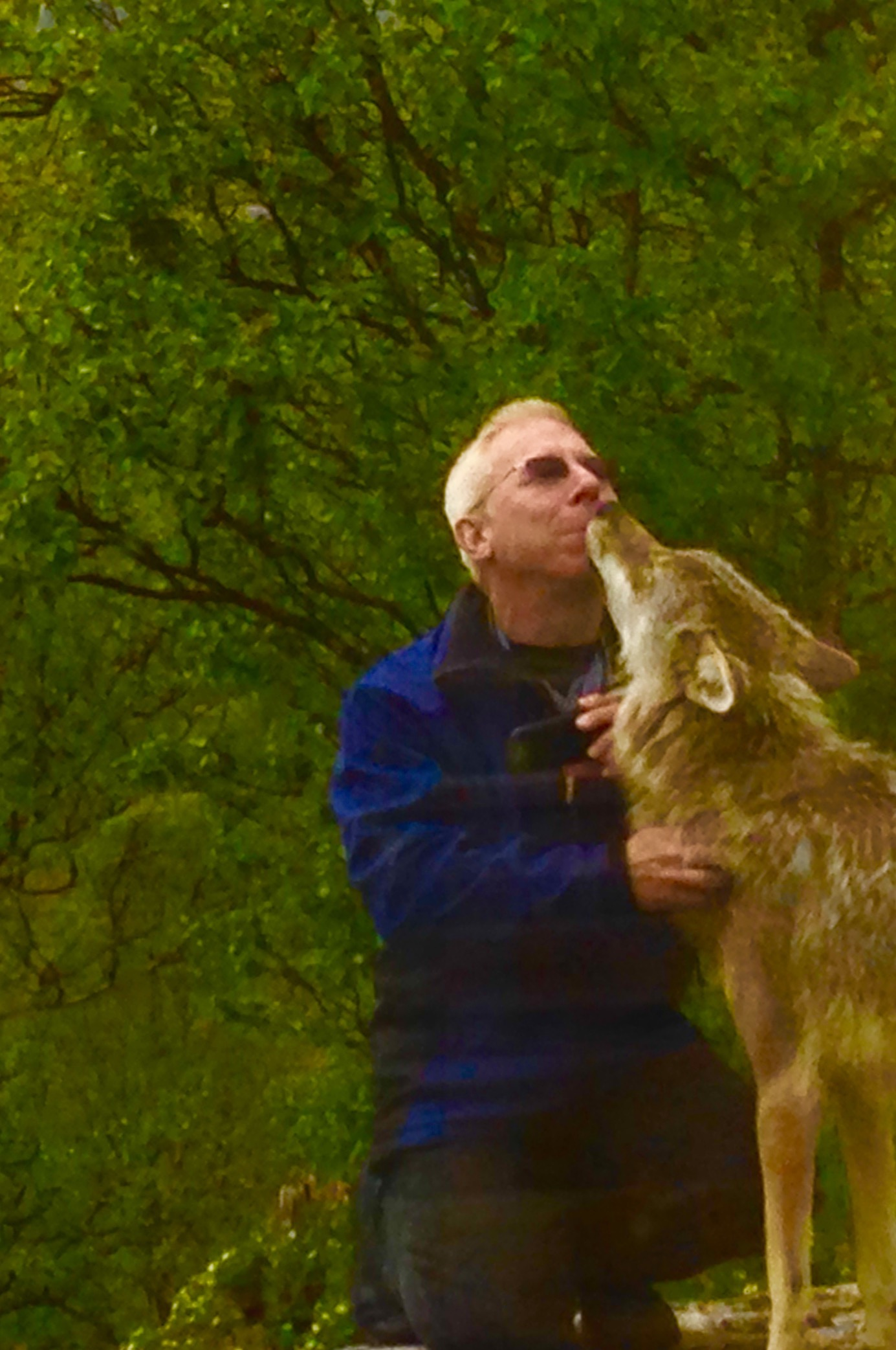 Jeff And The Wolf