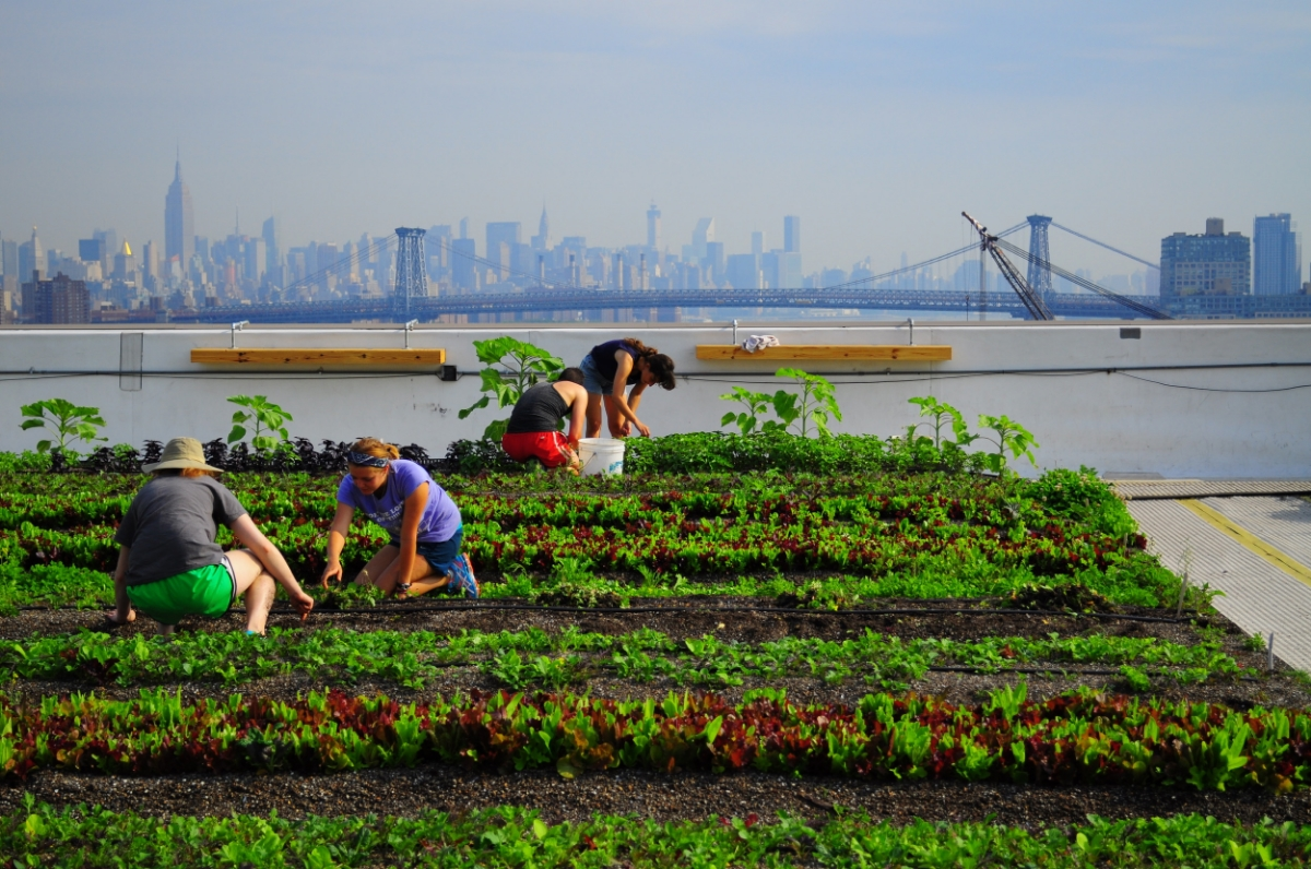 the concept of rooftop farming We have all heard of urban farms and rooftop gardens and even rooftop farms,  but a rooftop fish farm might be a radical new concept.
