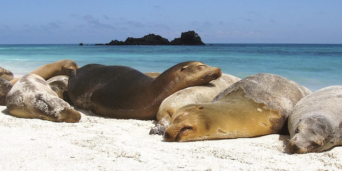 Explore the Galapagos on a New Luxury Yacht