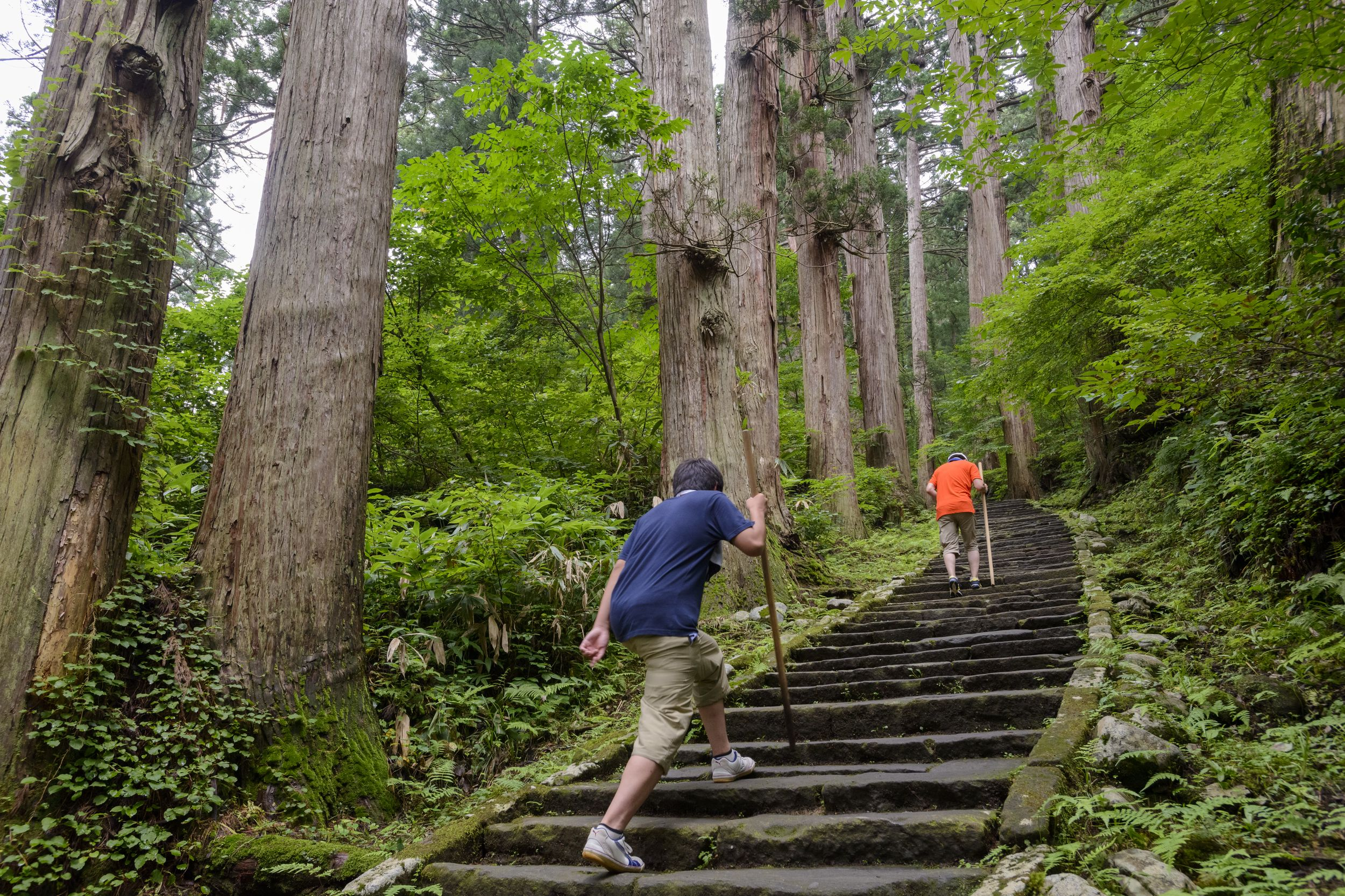 As you climbing the 2,446 steps up Haguro-san, you will pass through an ancient cedar forest with trees that are up to 1,000 years old. Courtesy of JNTO